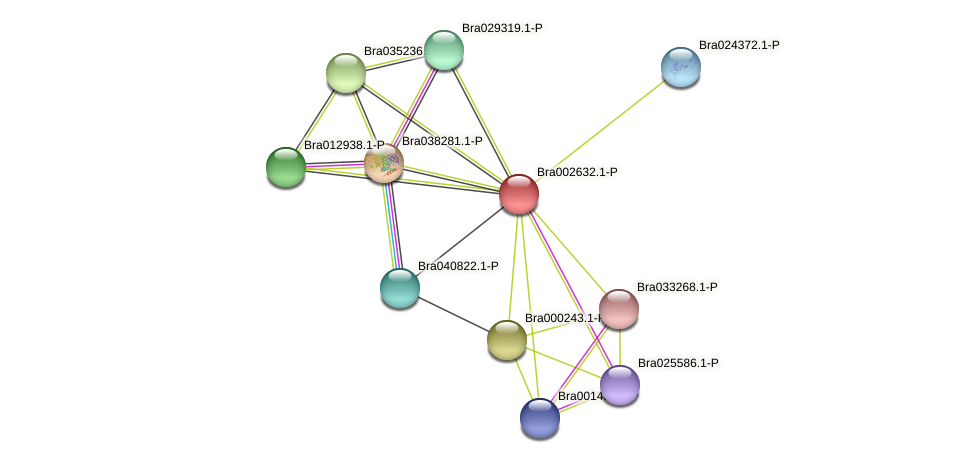 Bra002632 protein (Brassica rapa) - STRING interaction network