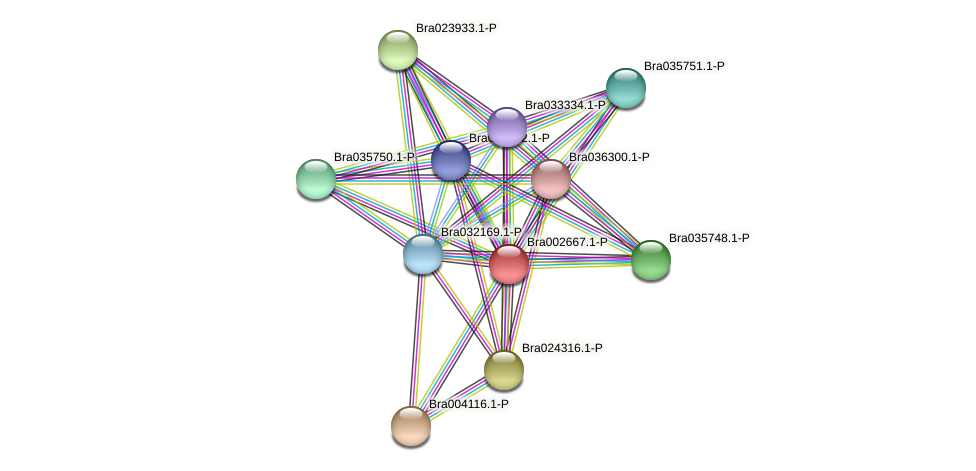 Bra002667 protein (Brassica rapa) - STRING interaction network