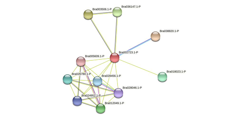 Bra002723 protein (Brassica rapa) - STRING interaction network