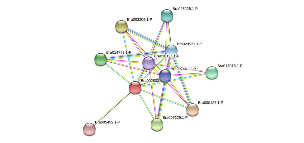 Bra002803 protein (Brassica rapa) - STRING interaction network