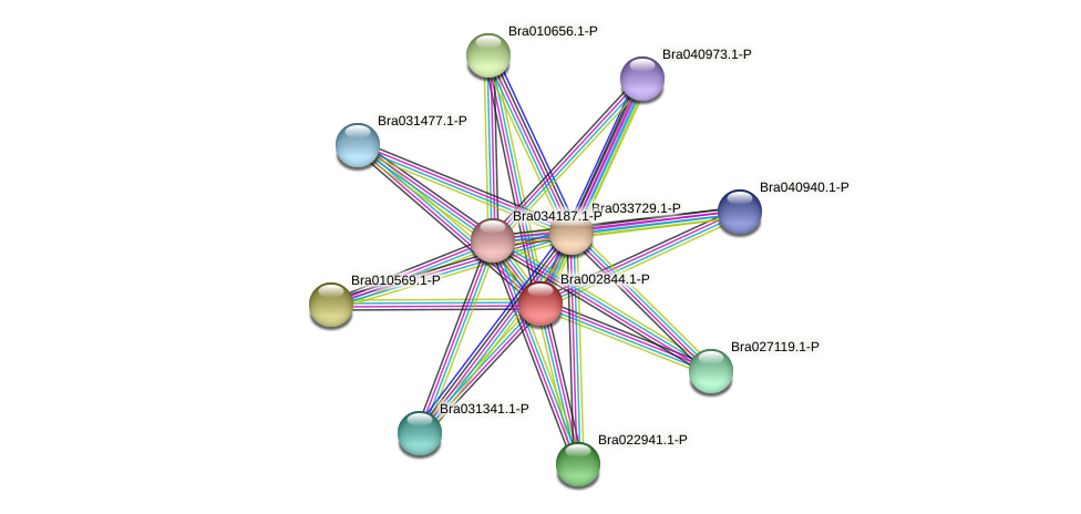 Bra002844 protein (Brassica rapa) - STRING interaction network