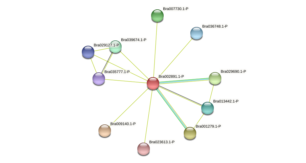 Bra002891 protein (Brassica rapa) - STRING interaction network
