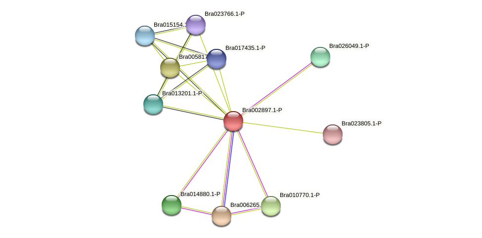 Bra002897 protein (Brassica rapa) - STRING interaction network