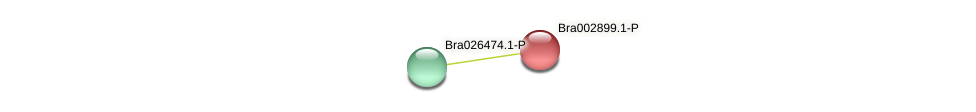 Bra002899 protein (Brassica rapa) - STRING interaction network