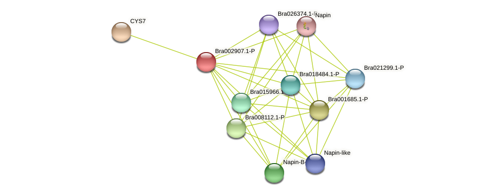 Bra002907 protein (Brassica rapa) - STRING interaction network