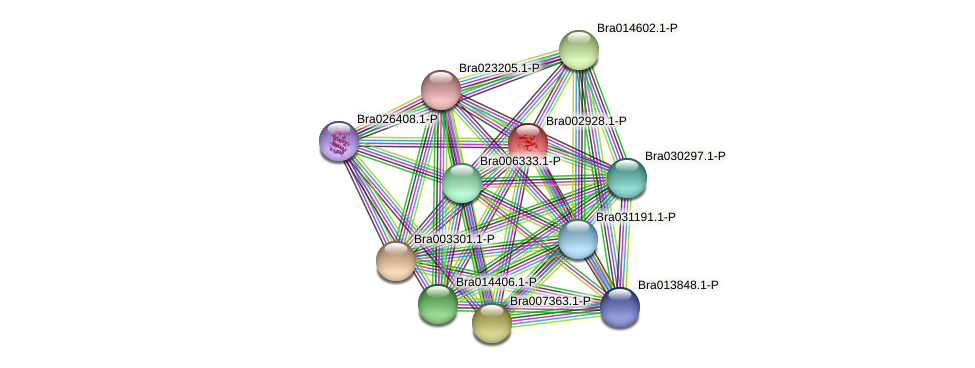Bra002928 protein (Brassica rapa) - STRING interaction network