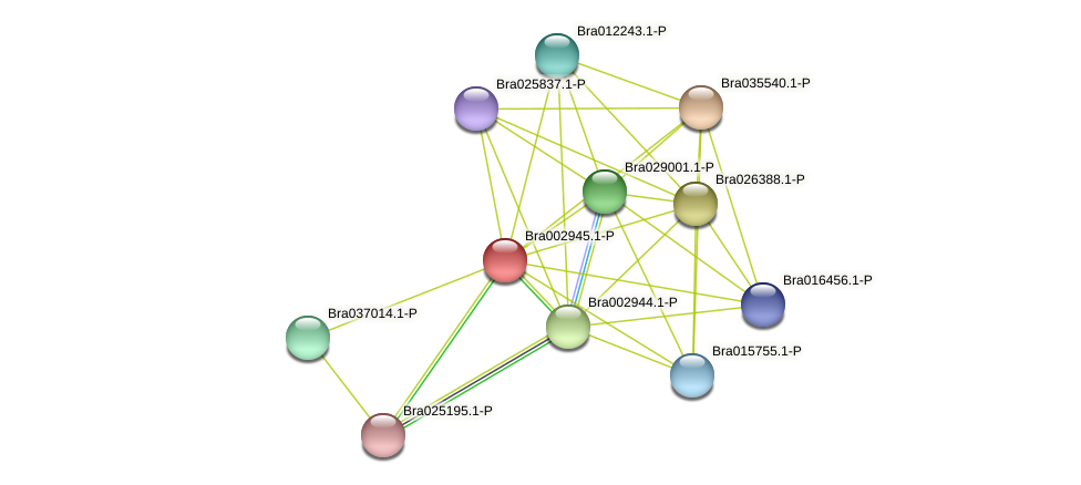 Bra002945 protein (Brassica rapa) - STRING interaction network