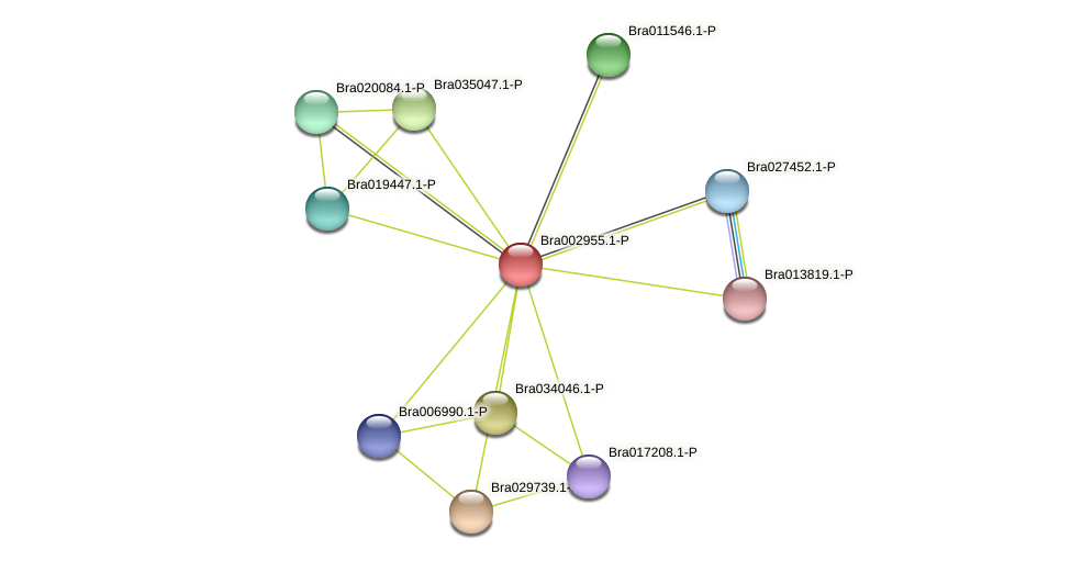 Bra002955 protein (Brassica rapa) - STRING interaction network