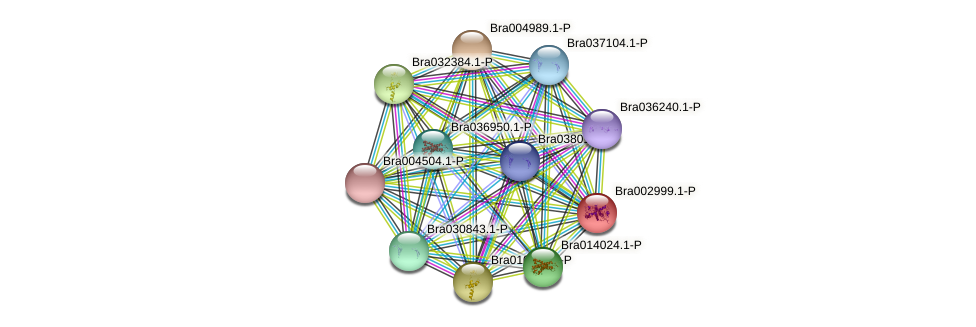 Bra002999 protein (Brassica rapa) - STRING interaction network