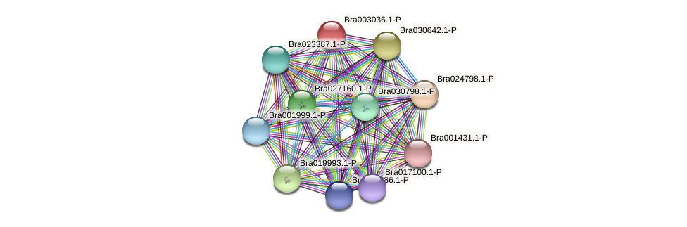 Bra003036 protein (Brassica rapa) - STRING interaction network