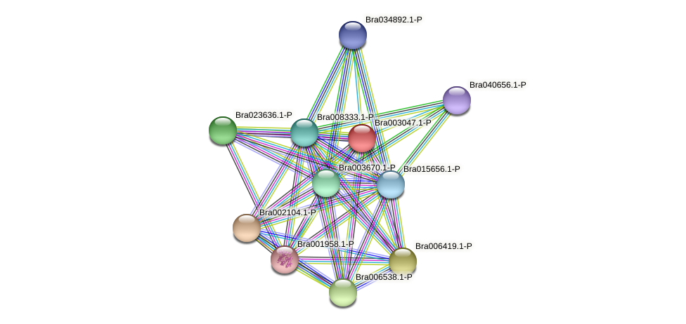 Bra003047 protein (Brassica rapa) - STRING interaction network
