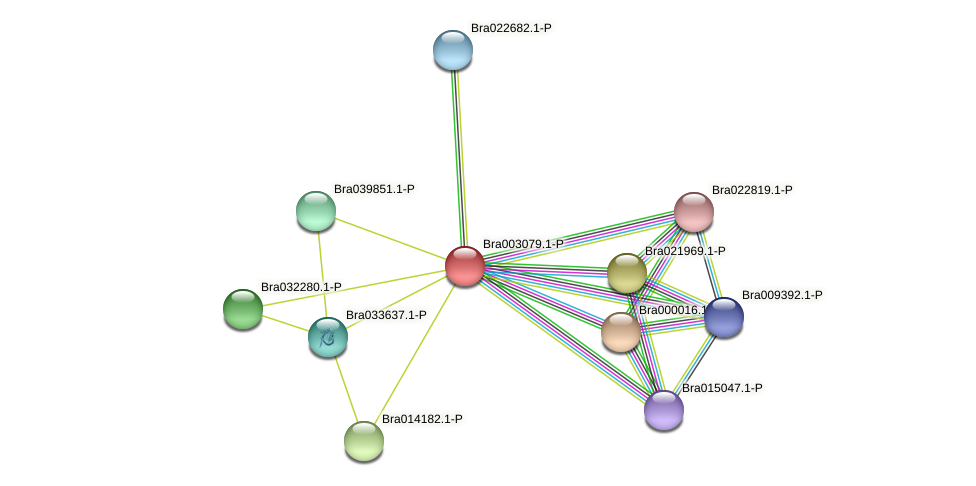 Bra003079 protein (Brassica rapa) - STRING interaction network