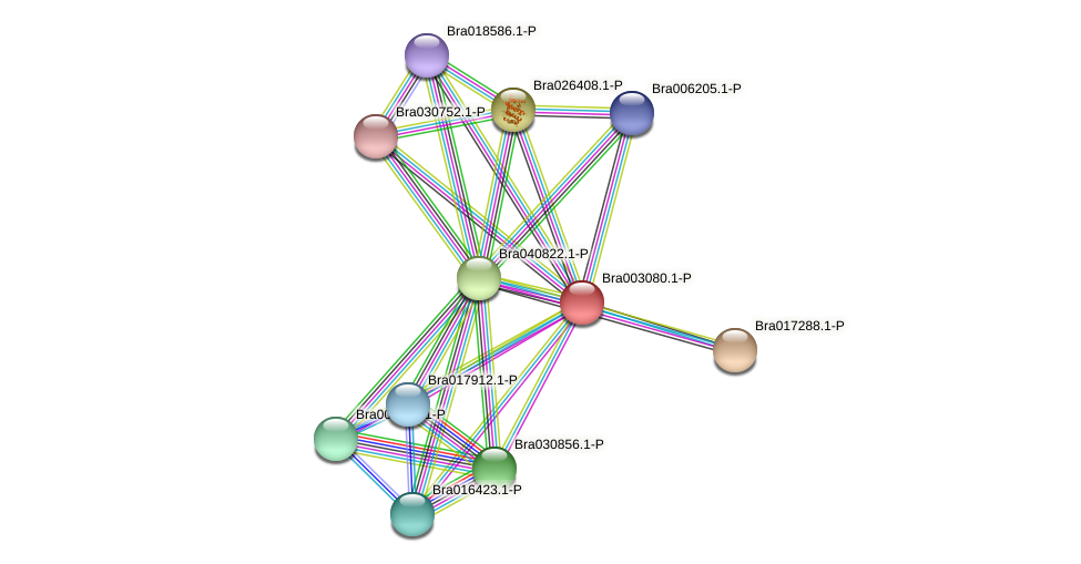 Bra003080 protein (Brassica rapa) - STRING interaction network