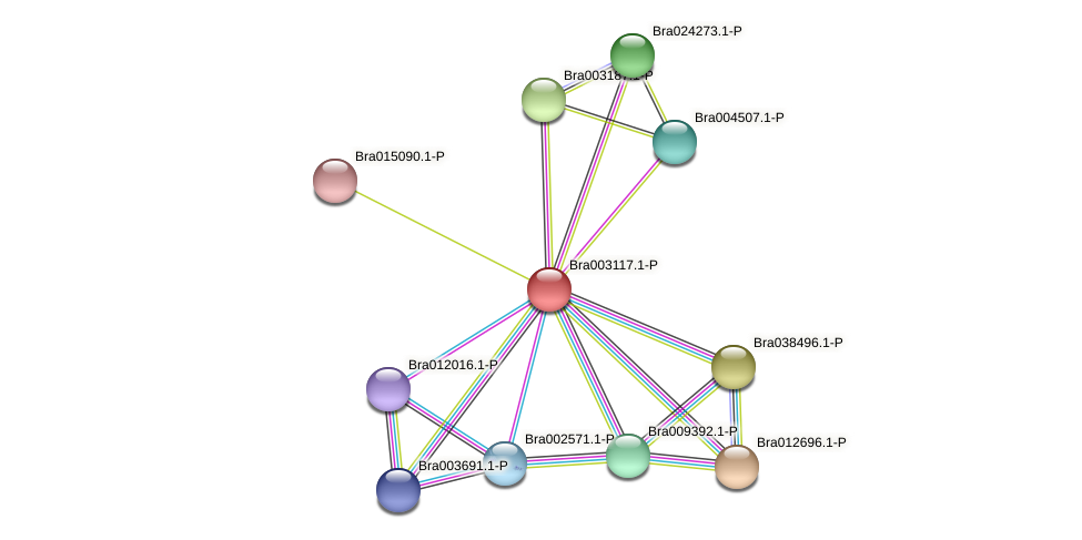 Bra003117 protein (Brassica rapa) - STRING interaction network