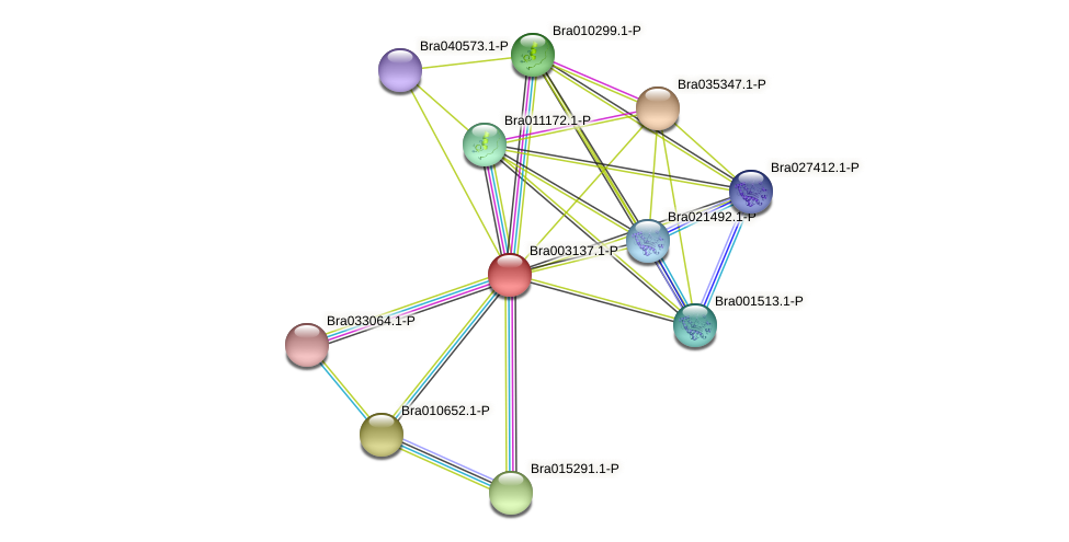Bra003137 protein (Brassica rapa) - STRING interaction network