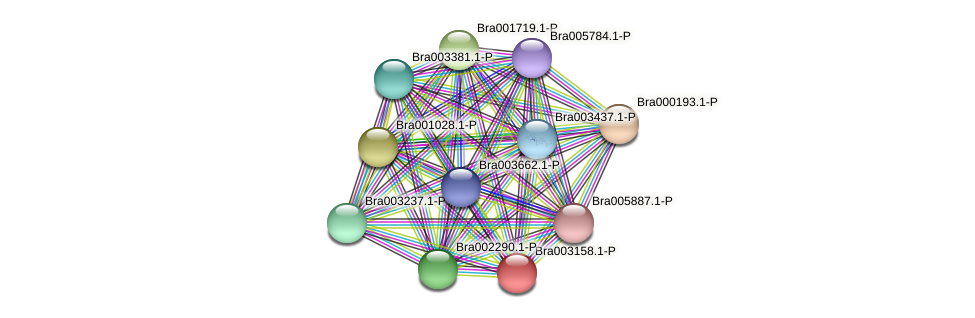 Bra003158 protein (Brassica rapa) - STRING interaction network