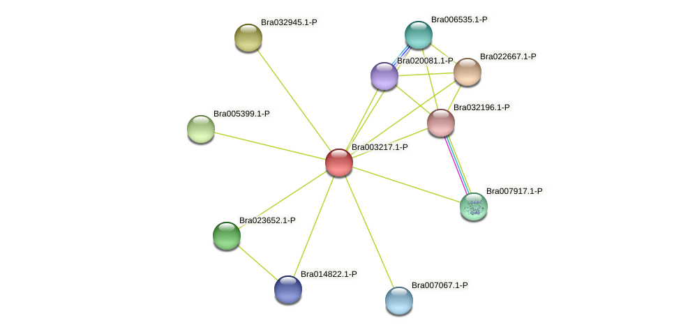 Bra003217 protein (Brassica rapa) - STRING interaction network