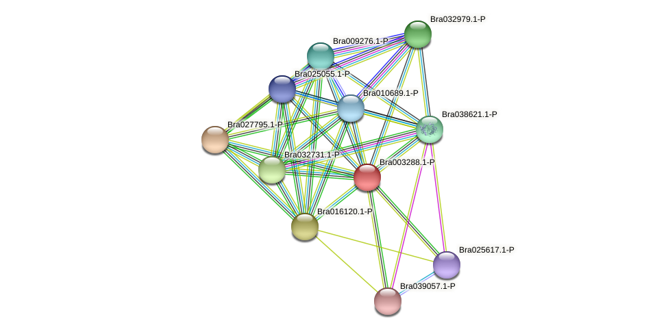 Bra003288 protein (Brassica rapa) - STRING interaction network