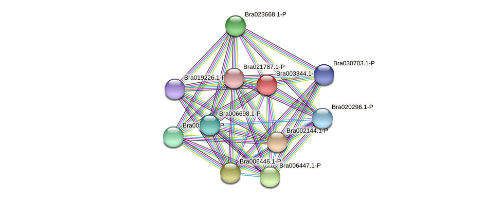 Bra003344 protein (Brassica rapa) - STRING interaction network