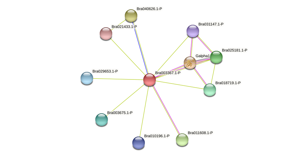 Bra003367 protein (Brassica rapa) - STRING interaction network