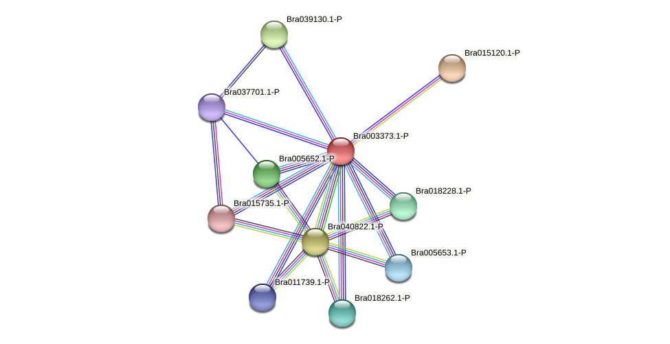Bra003373 protein (Brassica rapa) - STRING interaction network