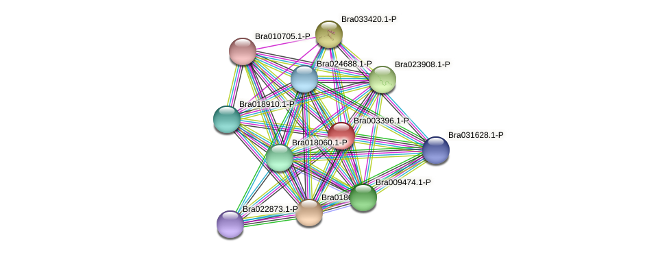 Bra003396 protein (Brassica rapa) - STRING interaction network