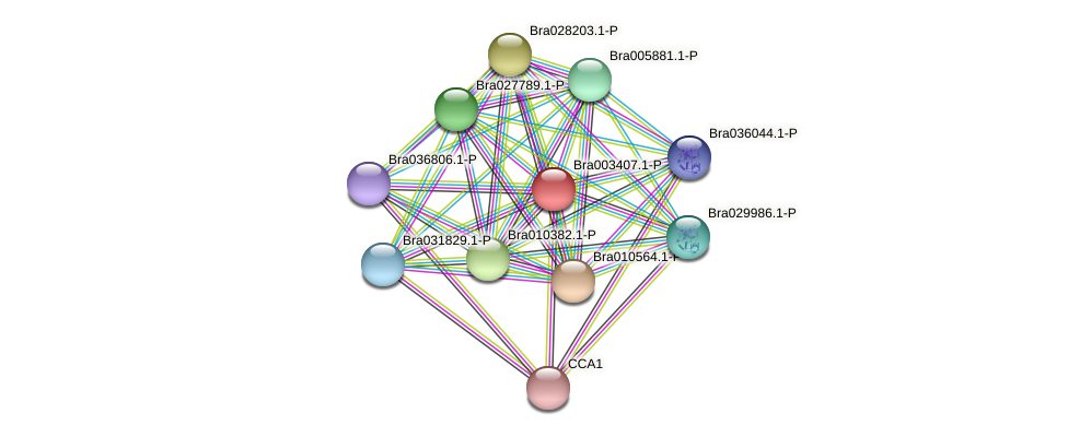 Bra003407 protein (Brassica rapa) - STRING interaction network