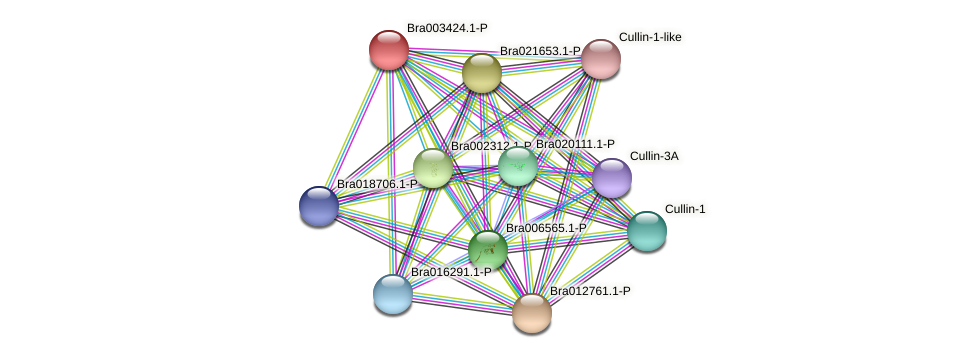 Bra003424 protein (Brassica rapa) - STRING interaction network