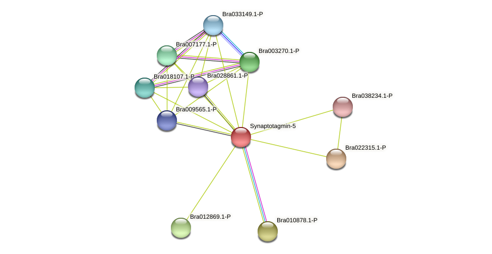Bra003434 protein (Brassica rapa) - STRING interaction network