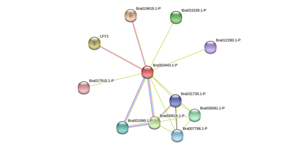 Bra003443 protein (Brassica rapa) - STRING interaction network