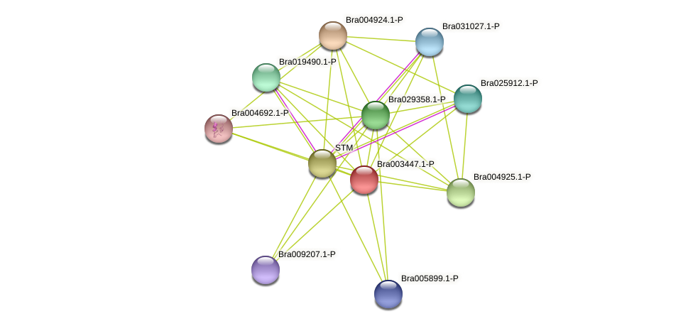 Bra003447 protein (Brassica rapa) - STRING interaction network