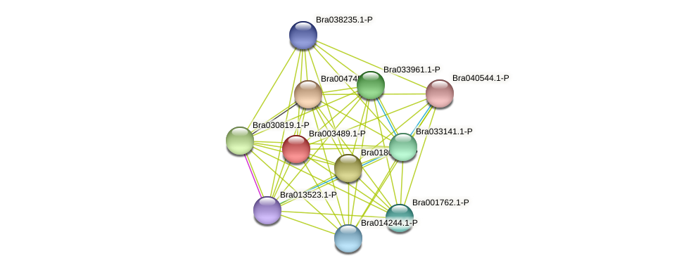 Bra003489 protein (Brassica rapa) - STRING interaction network