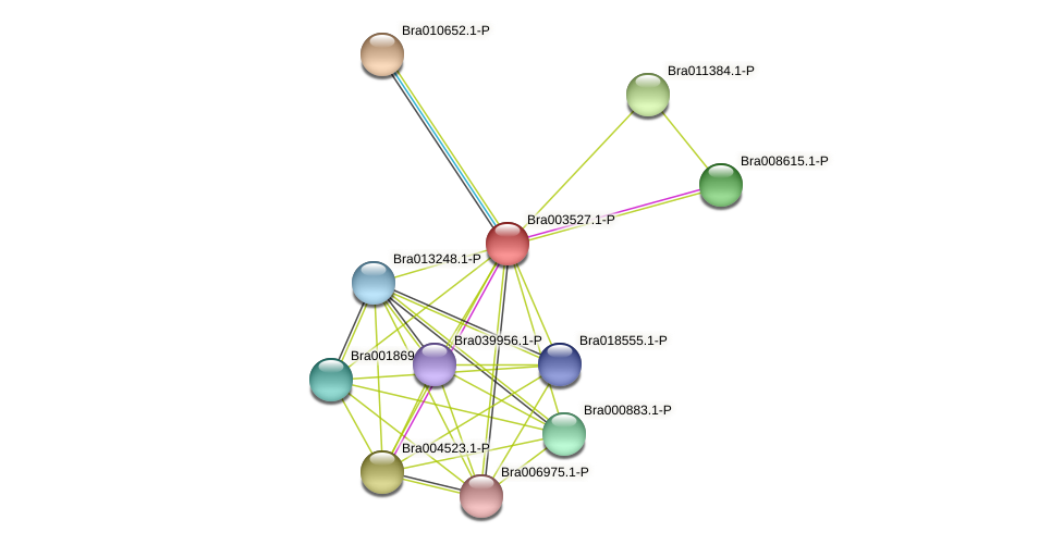 Bra003527 protein (Brassica rapa) - STRING interaction network