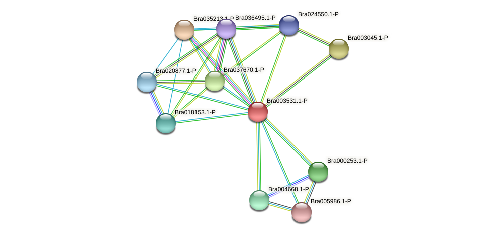 Bra003531 protein (Brassica rapa) - STRING interaction network