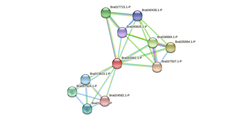 Bra003562 protein (Brassica rapa) - STRING interaction network