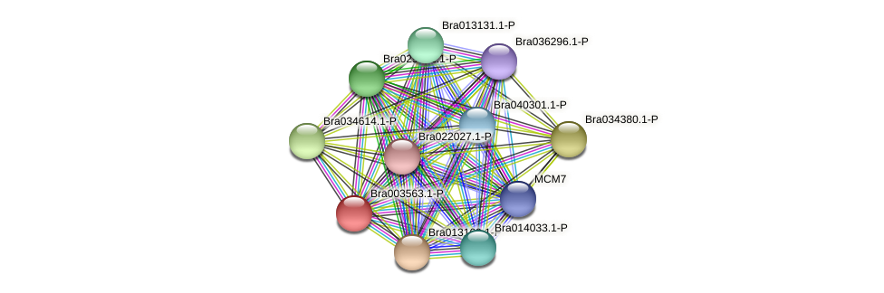 Bra003563 protein (Brassica rapa) - STRING interaction network
