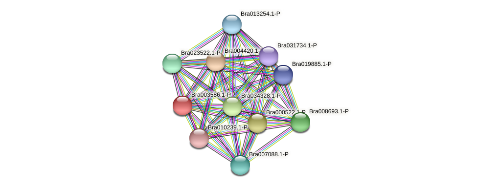 Bra003586 protein (Brassica rapa) - STRING interaction network