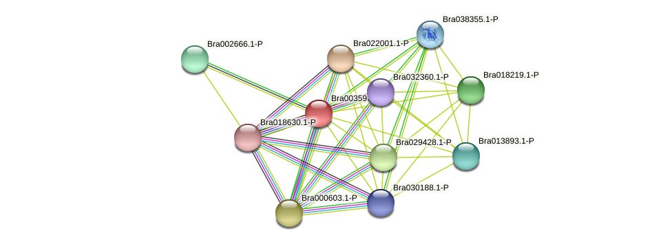 Bra003597 protein (Brassica rapa) - STRING interaction network