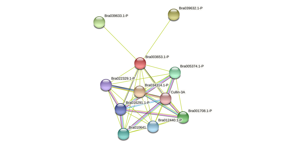 Bra003653 protein (Brassica rapa) - STRING interaction network
