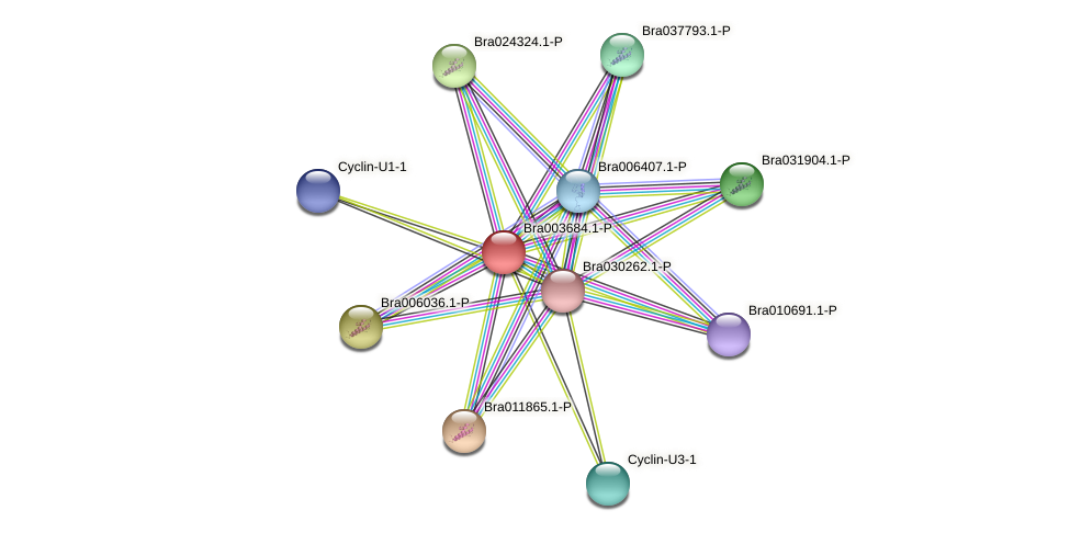 Bra003684 protein (Brassica rapa) - STRING interaction network