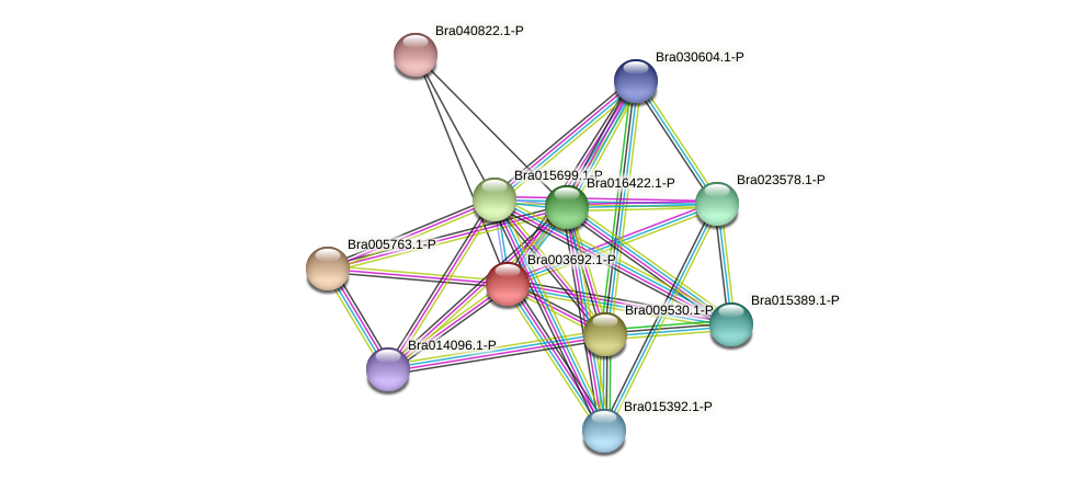 Bra003692 protein (Brassica rapa) - STRING interaction network