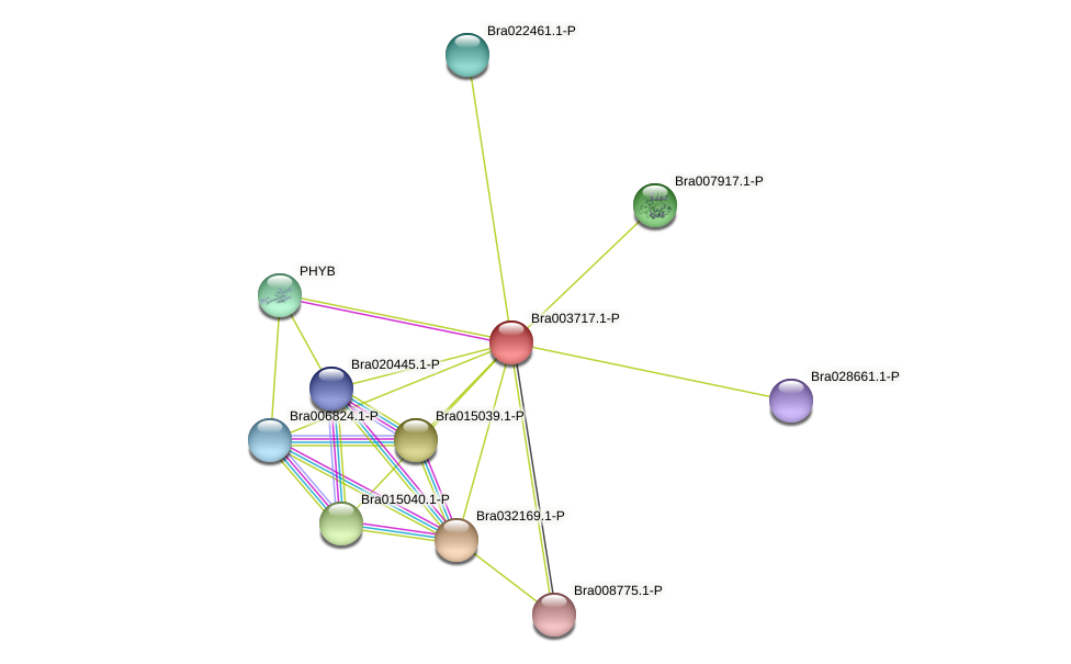 Bra003717 protein (Brassica rapa) - STRING interaction network