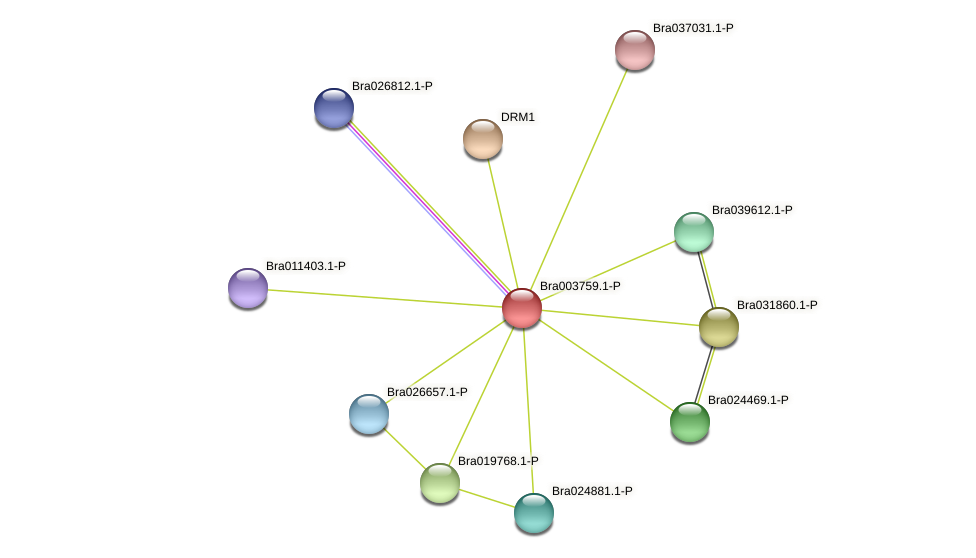 Bra003759 protein (Brassica rapa) - STRING interaction network