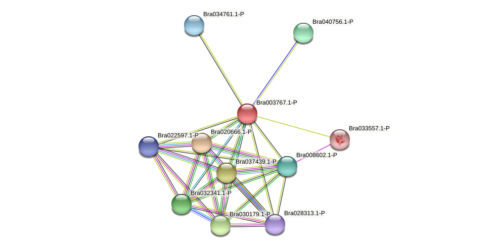 Bra003767 protein (Brassica rapa) - STRING interaction network