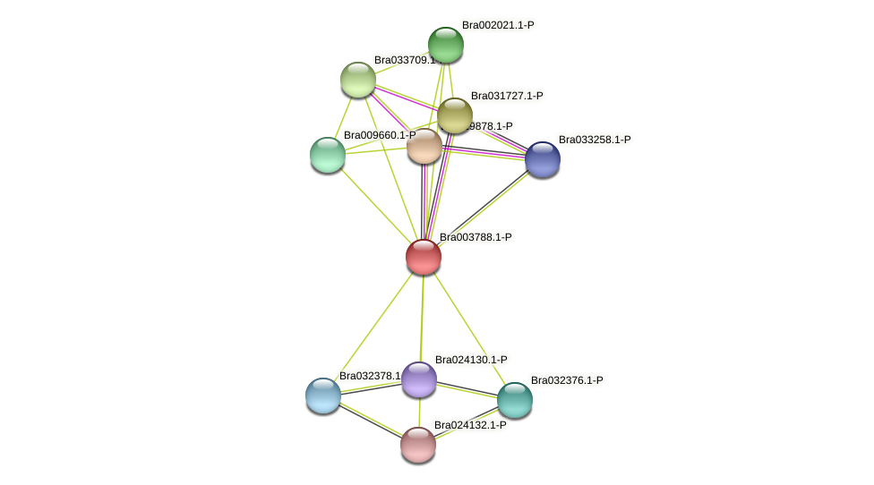 Bra003788 protein (Brassica rapa) - STRING interaction network