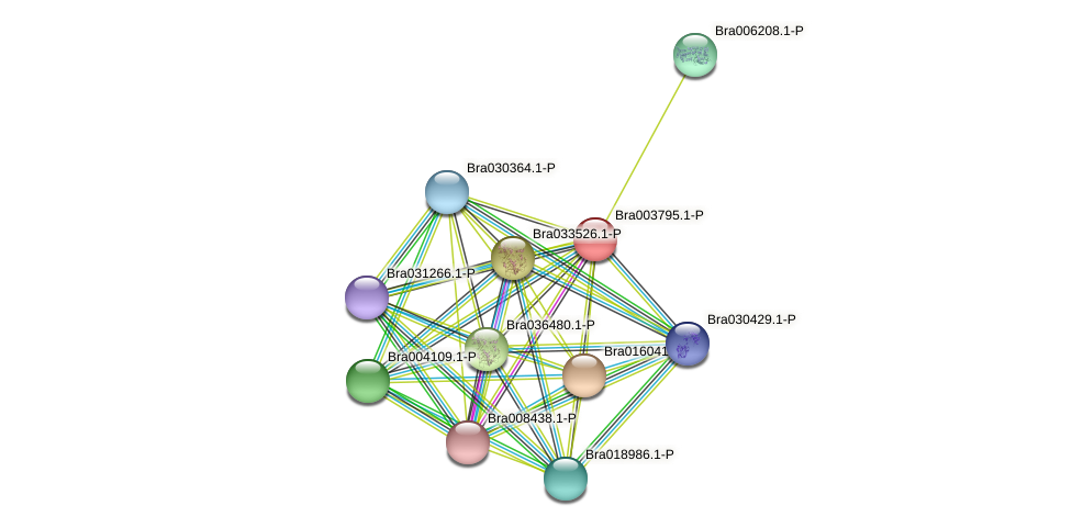 Bra003795 protein (Brassica rapa) - STRING interaction network