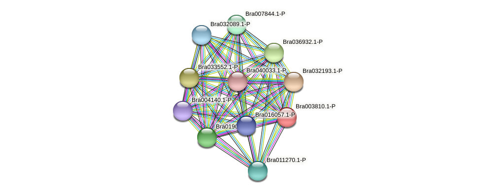 Bra003810 protein (Brassica rapa) - STRING interaction network