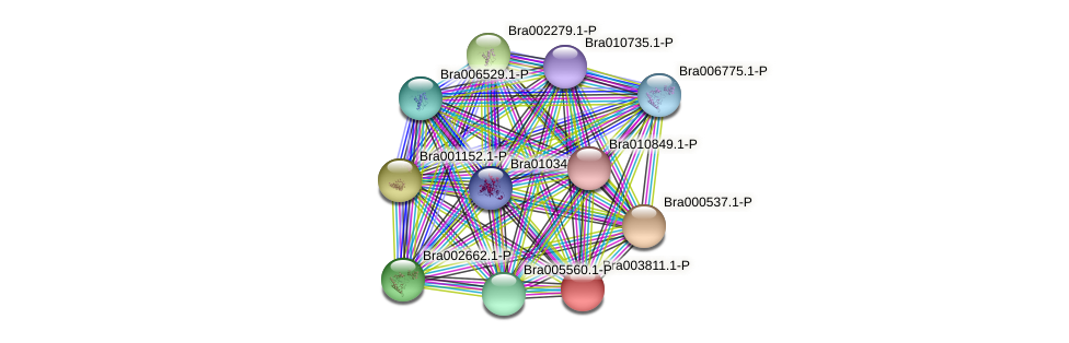 Bra003811 protein (Brassica rapa) - STRING interaction network