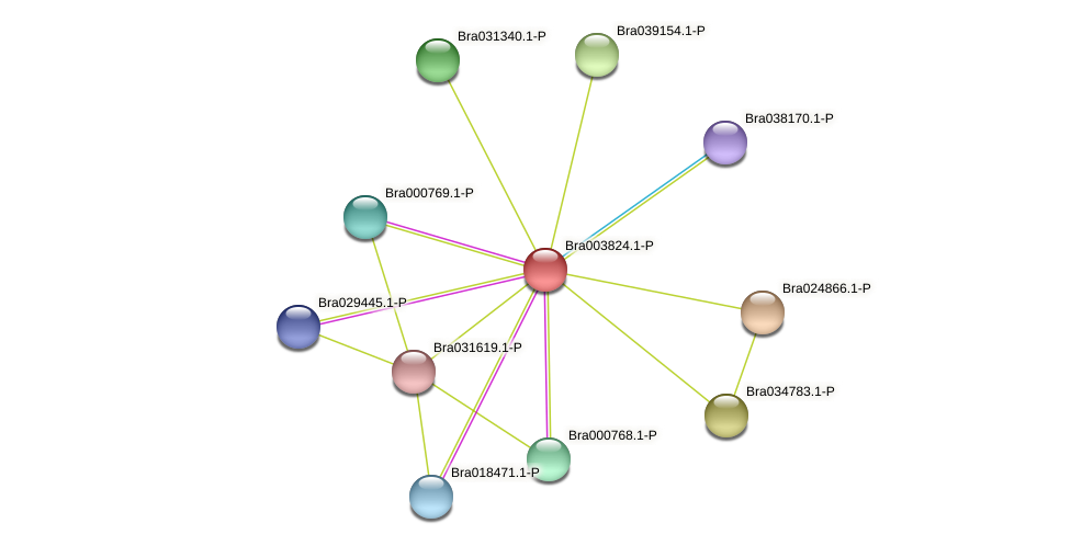 Bra003824 protein (Brassica rapa) - STRING interaction network