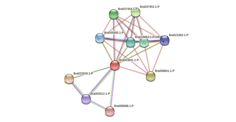 Bra003841 protein (Brassica rapa) - STRING interaction network
